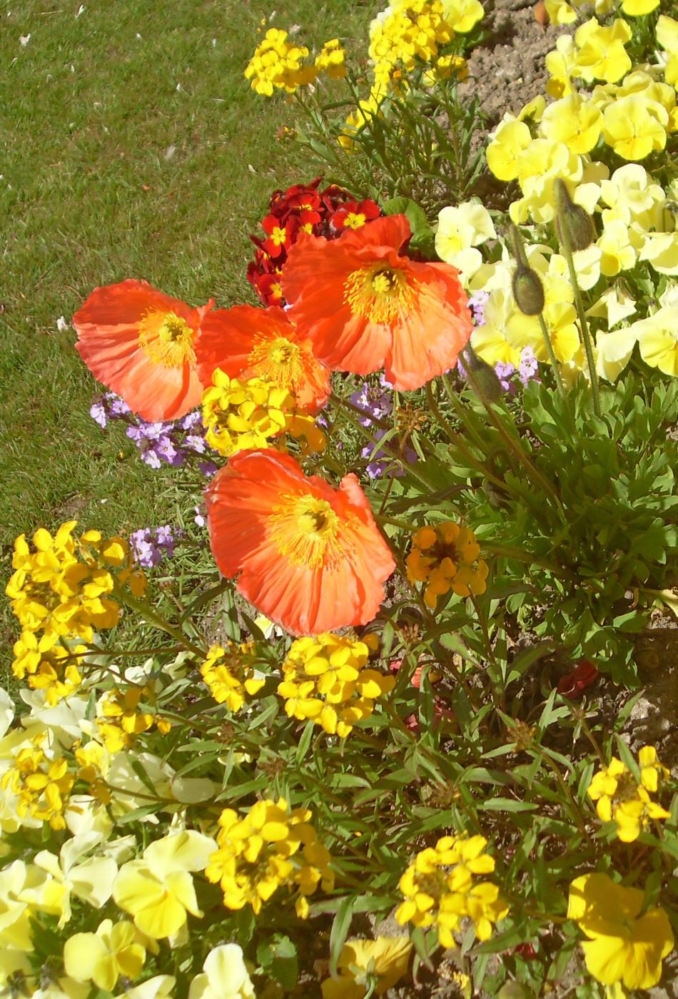 Photographie de fleurs for Site de fleurs
