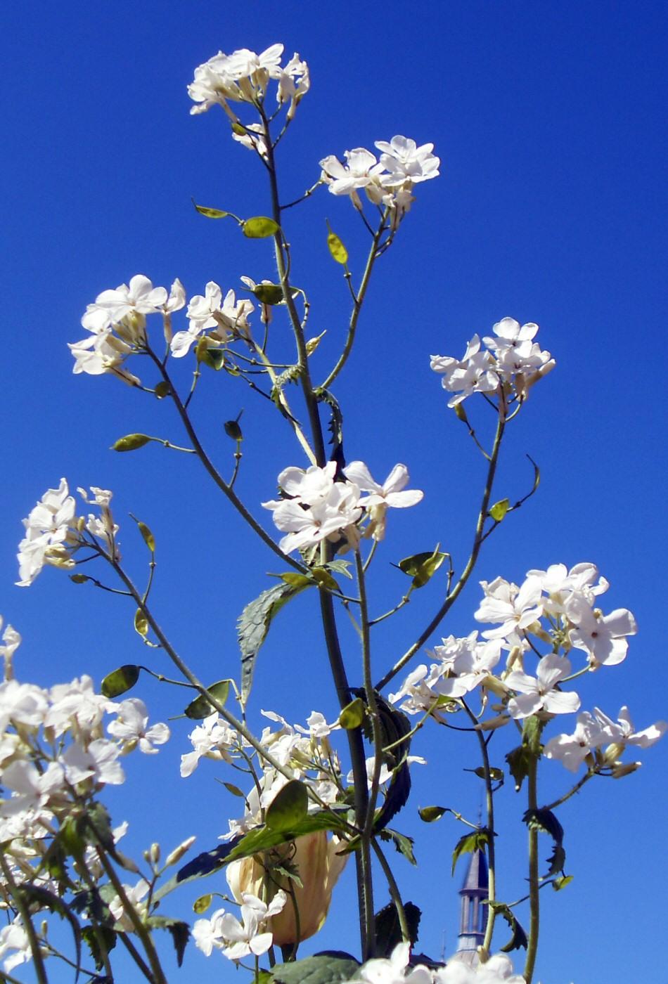 photographie de fleurs blanches sur ciel bleu